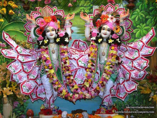 Sri Sri Gaura Nitai Wallpaper (085)