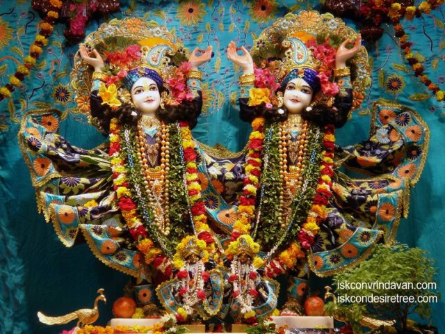 Sri Sri Gaura Nitai Wallpaper (048)