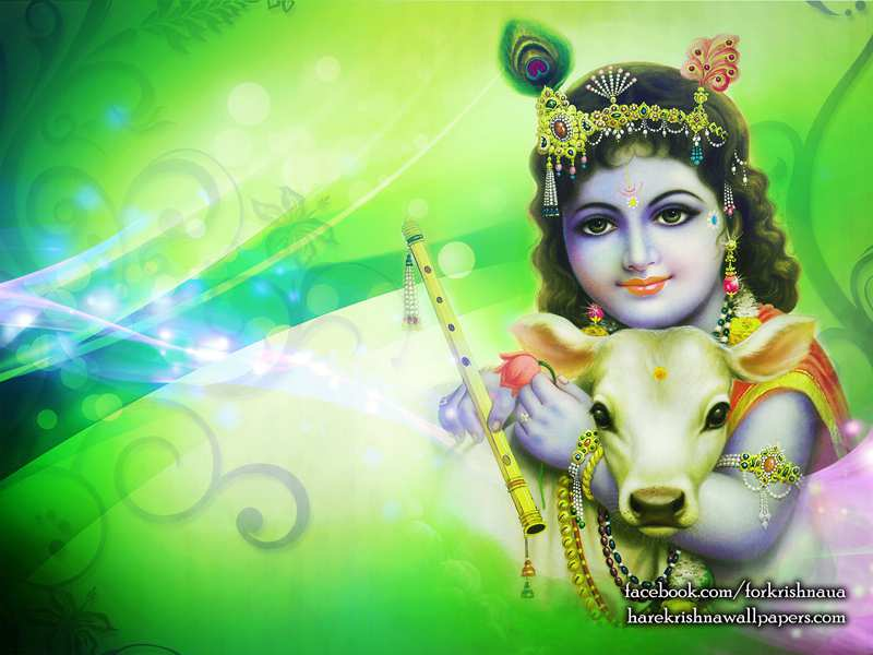 God Krishna With Cow Lord Krishna And Cow