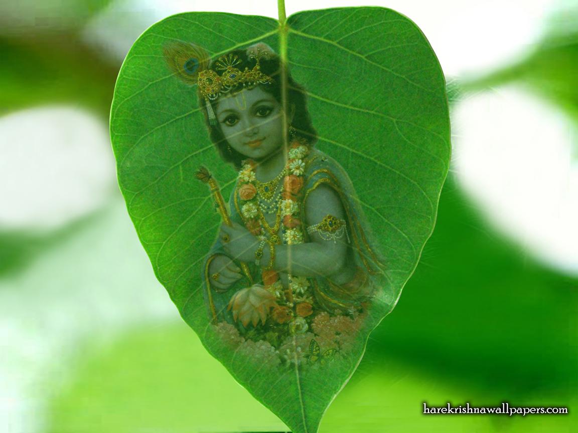 Krishna Wallpaper (038) Size 1152x864 Download