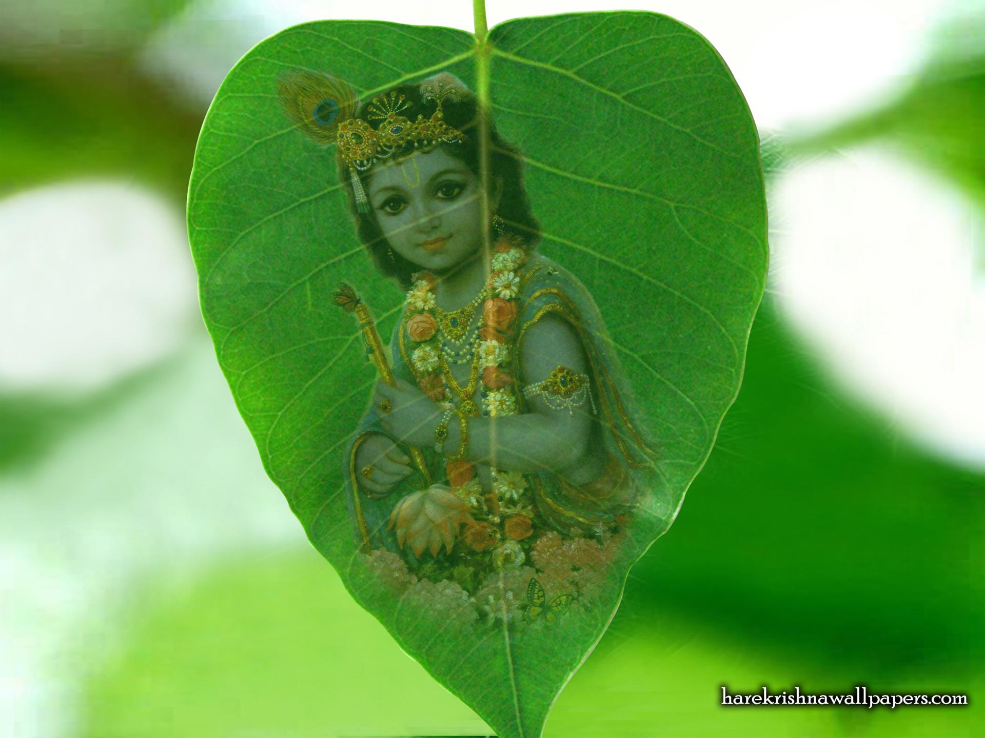 Krishna Wallpaper (038) Size 1920x1440 Download