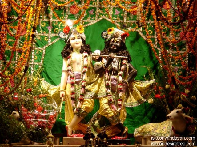 Sri Sri Krishna Balaram Wallpaper (099)