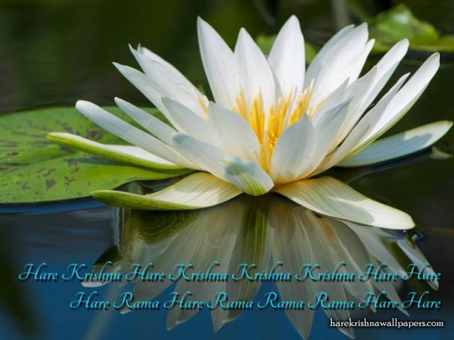 Chant Hare Krishna Mahamantra Wallpaper (014)