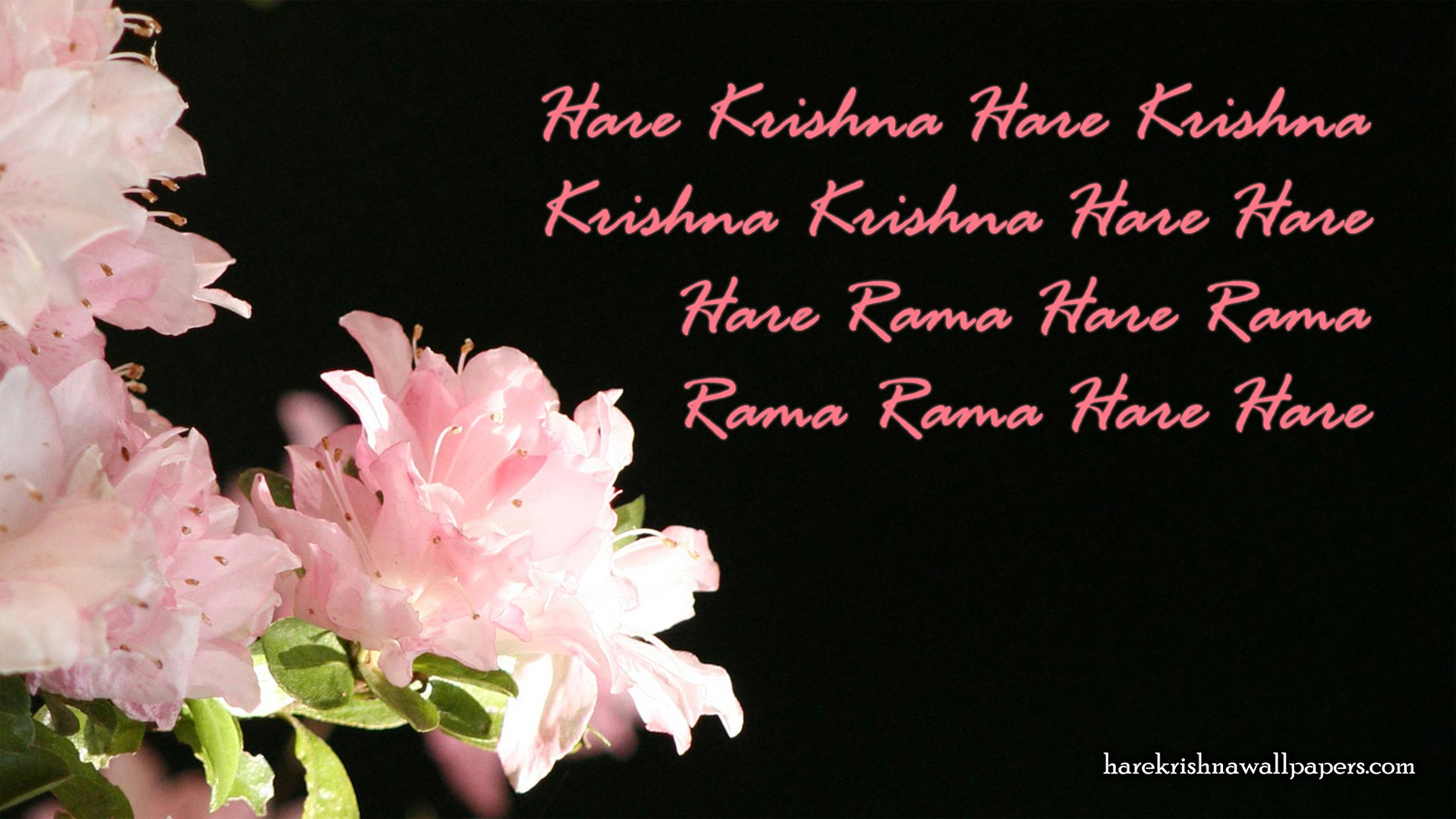Chant Hare Krishna Mahamantra Wallpaper (012) Size 1600x900 Download