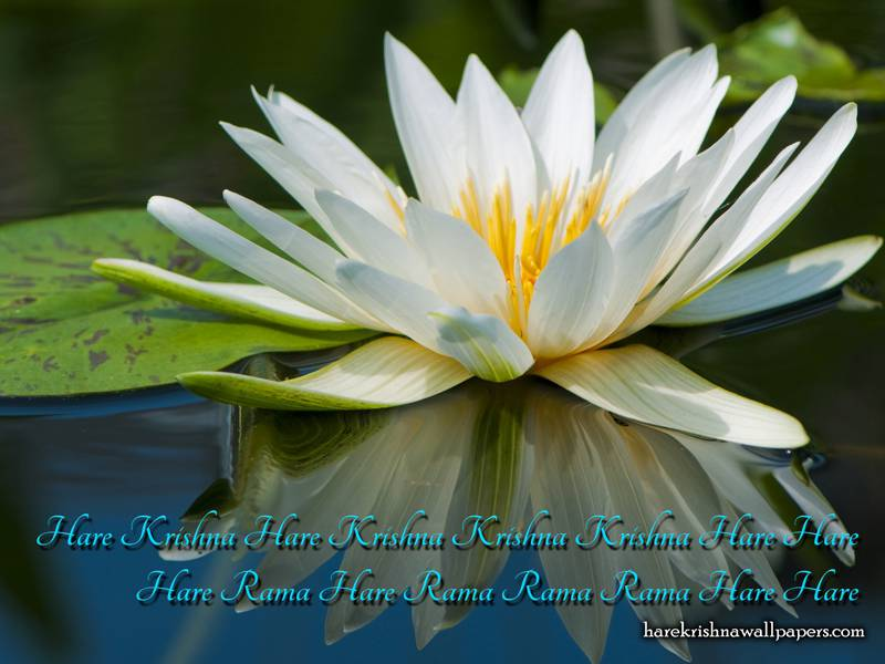 Chant Hare Krishna Mahamantra Wallpaper (014)