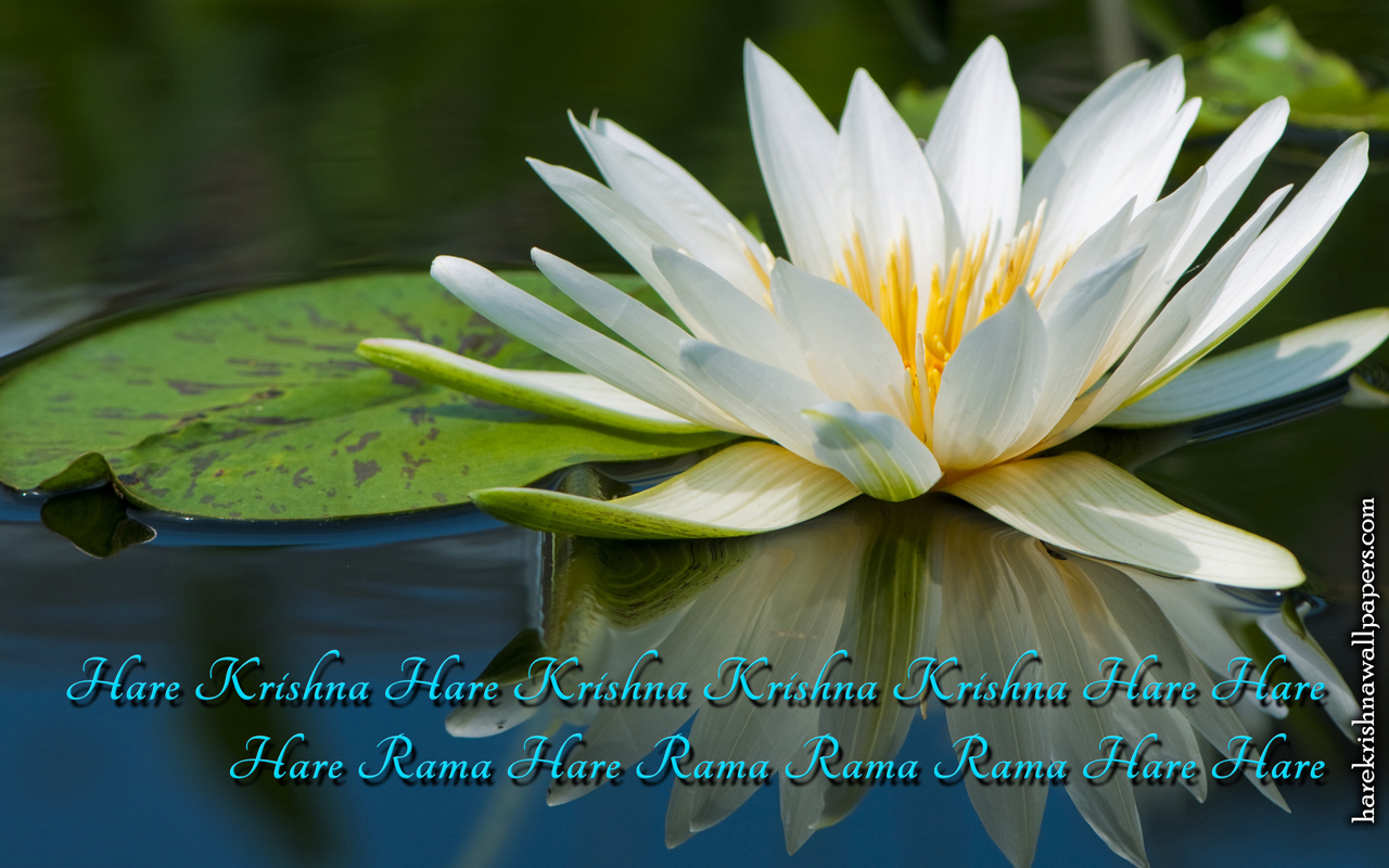 Chant Hare Krishna Mahamantra Wallpaper (014) Size 1280x800 Download