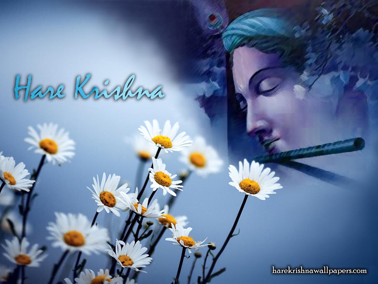Hare Krishna Wallpaper (002) Size 1280x960 Download