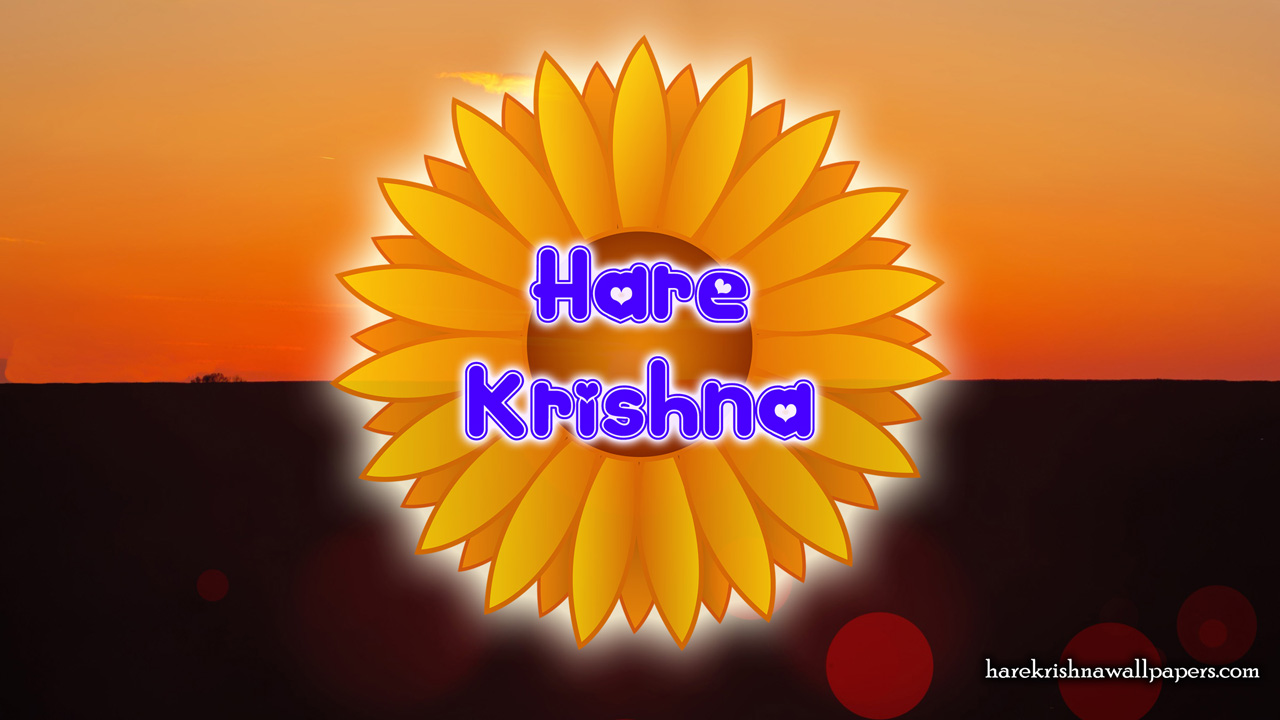 Hare Krishna Wallpaper (009) Size1280x720 Download