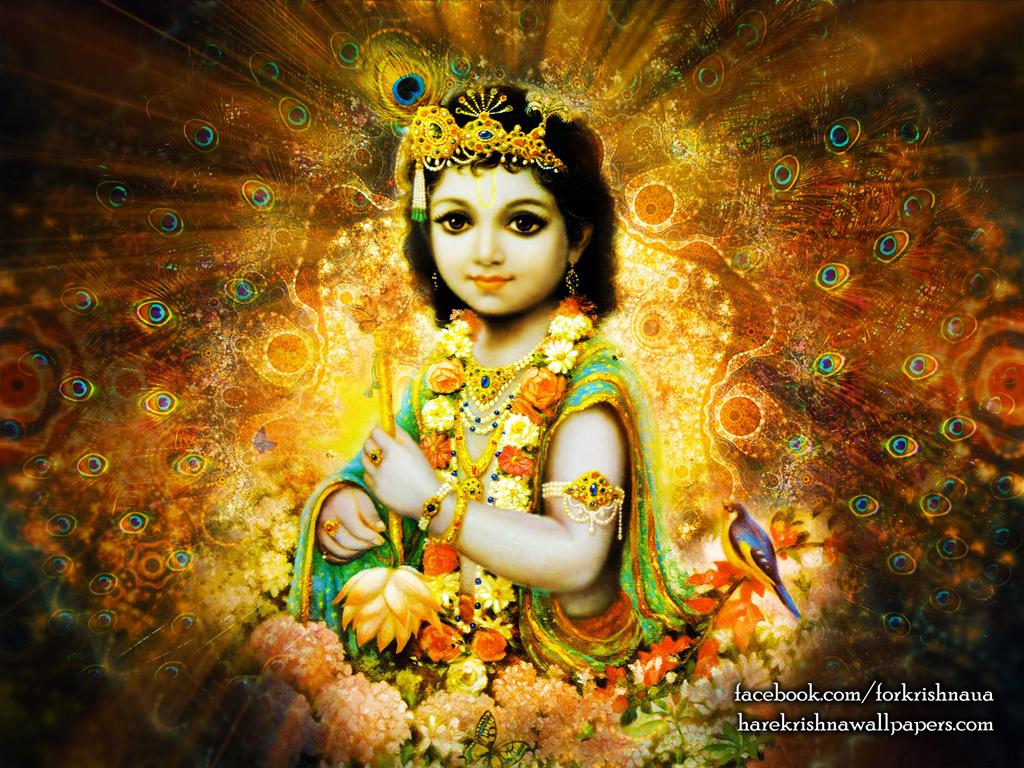 Krishna Wallpaper (004) Size 1024x768 Download