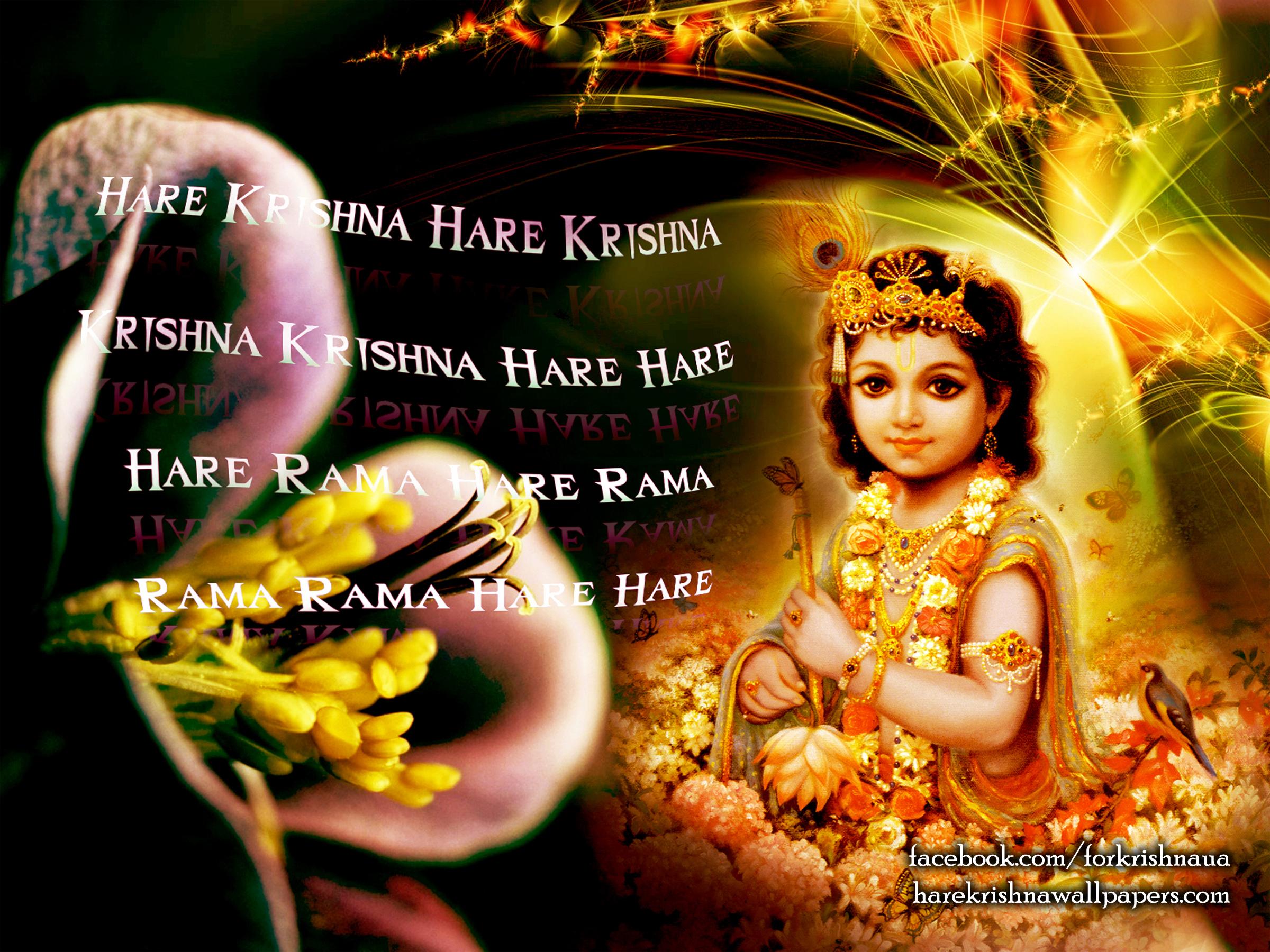 Krishna Wallpaper (011) Size 2400x1800 Download