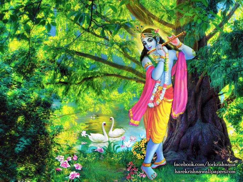 Krishna Wallpaper (012) Size 800x600 Download
