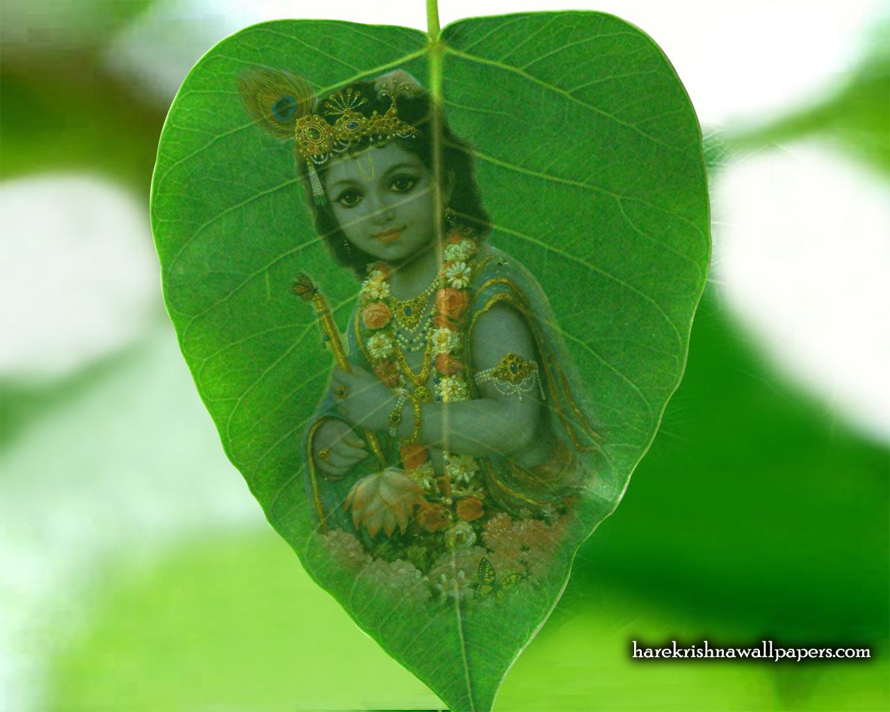 Krishna Wallpaper (038) Size 1280x1024 Download