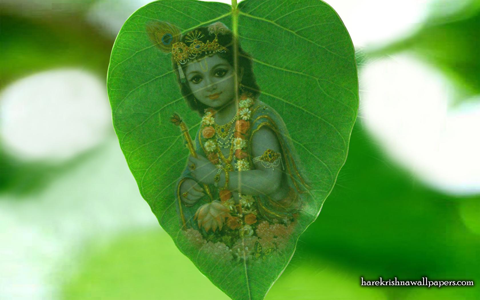 Krishna Wallpaper (038) Size 1680x1050 Download