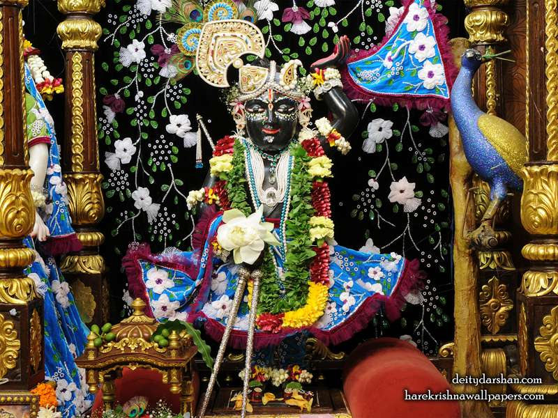 Sri Gopal Wallpaper (020)