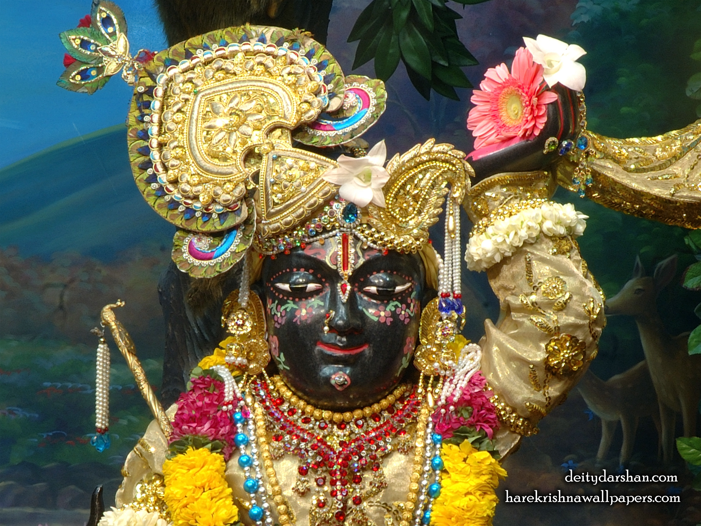 Sri Gopal Close up Wallpaper (023) Size 2400x1800 Download