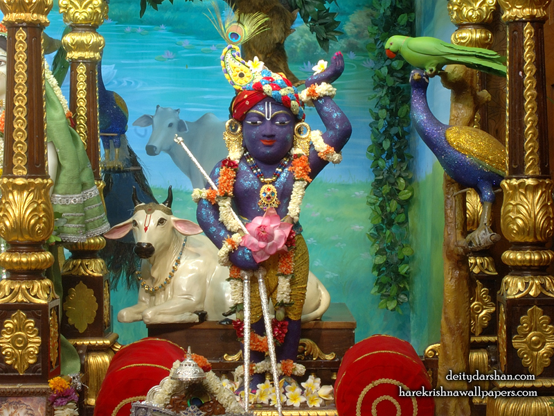 Sri Gopal Wallpaper (024) Size 800x600 Download