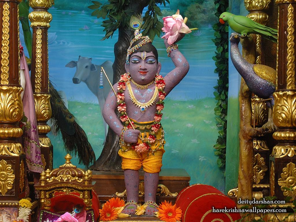 Sri Gopal Wallpaper (032) Size 1024x768 Download