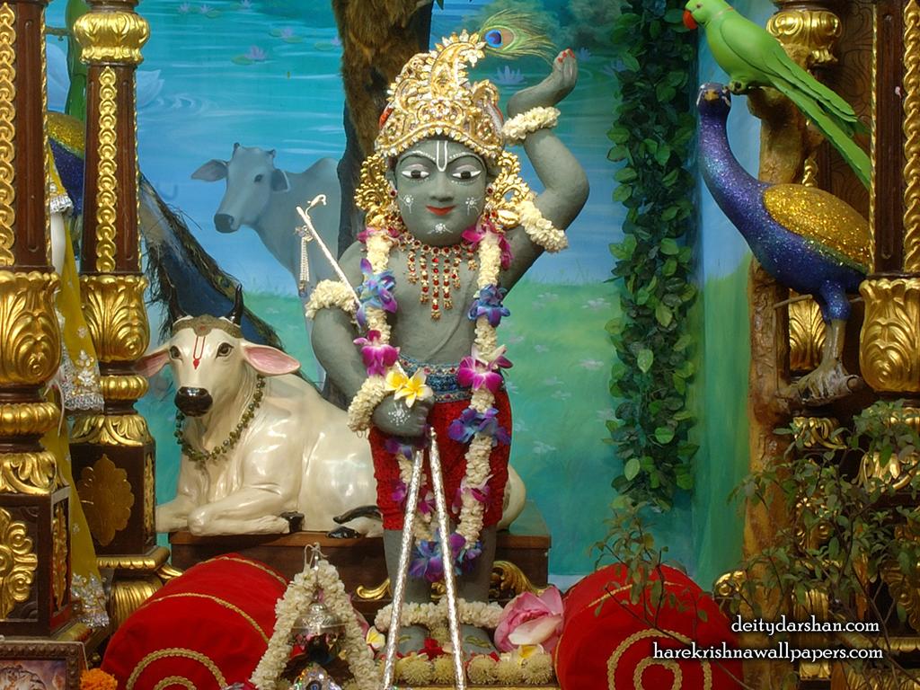 Sri Gopal Wallpaper (035) Size 1024x768 Download