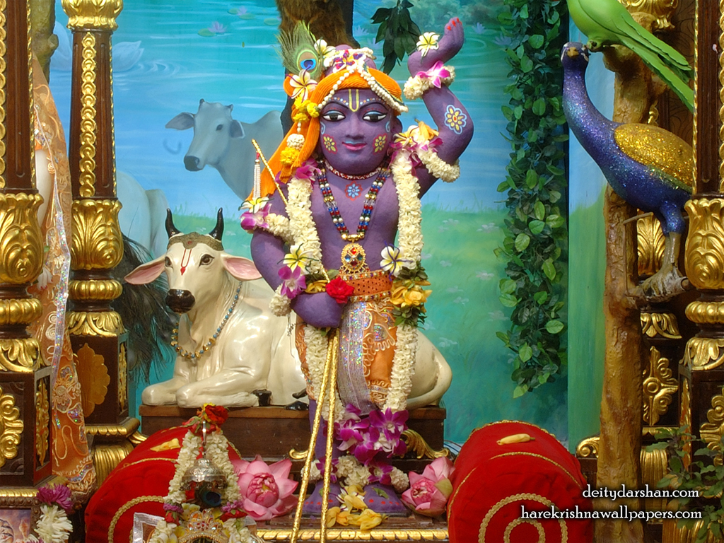 Sri Gopal Wallpaper (037) Size 1024x768 Download