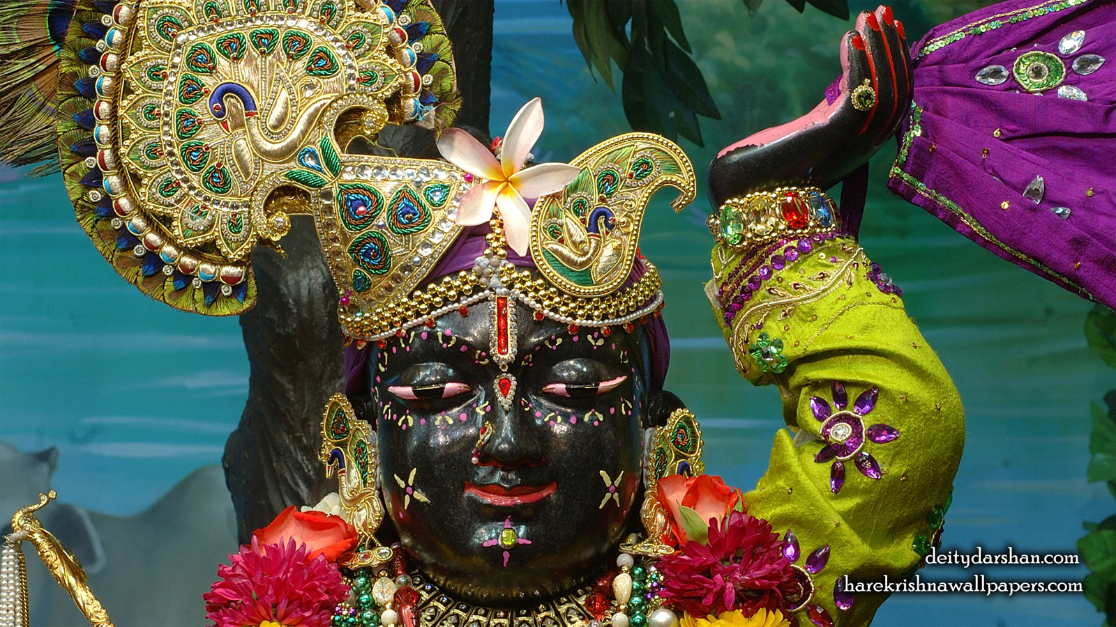 Sri Gopal Close up Wallpaper (049) Size 1600x900 Download