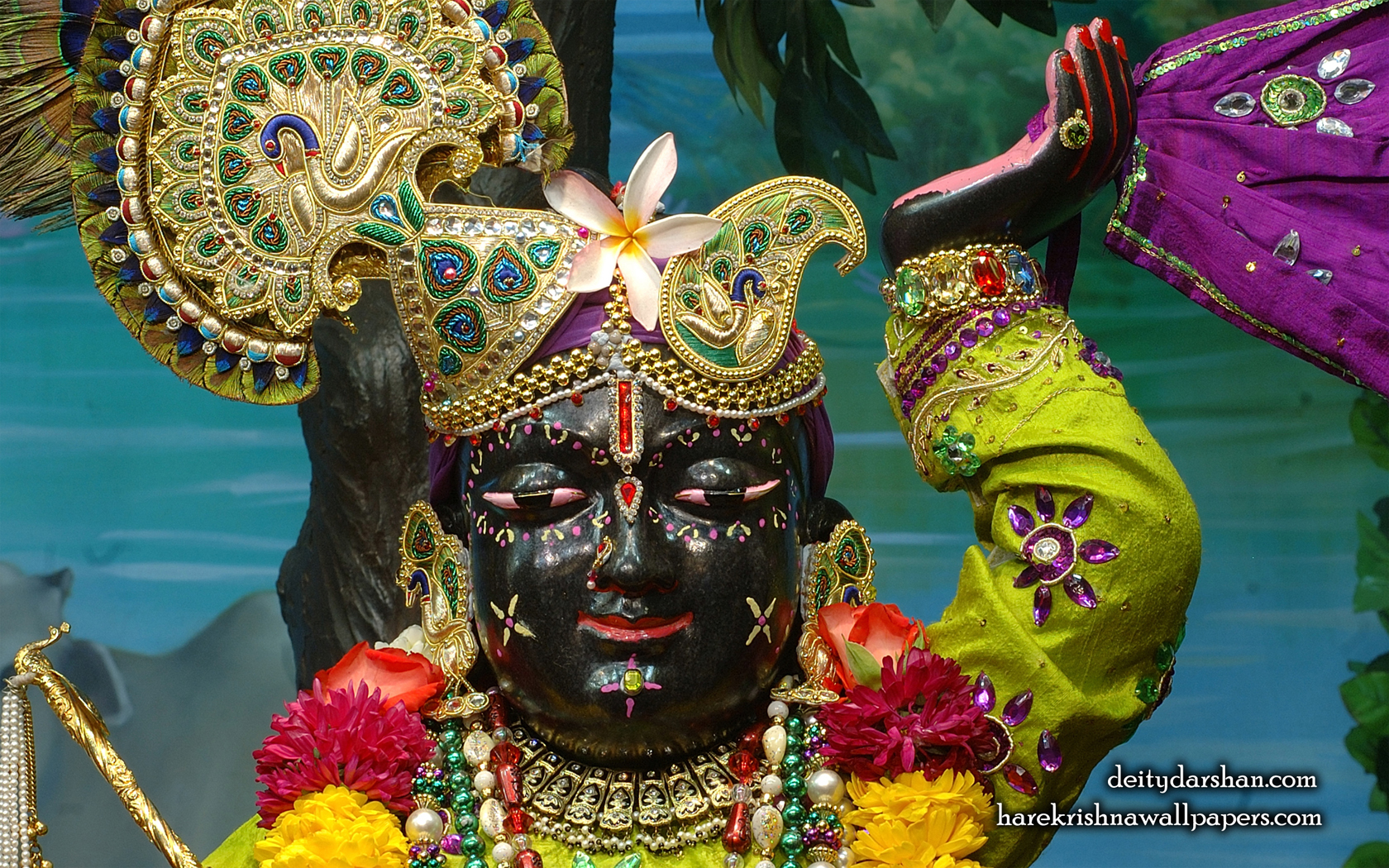 Sri Gopal Close up Wallpaper (049) Size 1680x1050 Download
