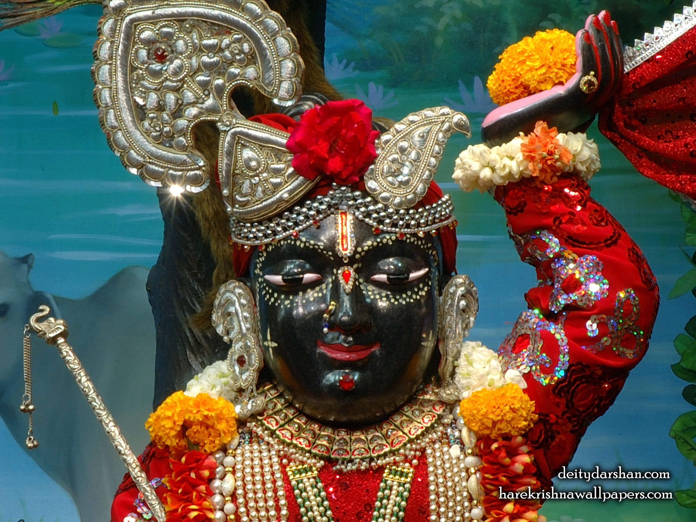 Sri Gopal Close up Wallpaper (053) Size 2400x1800 Download