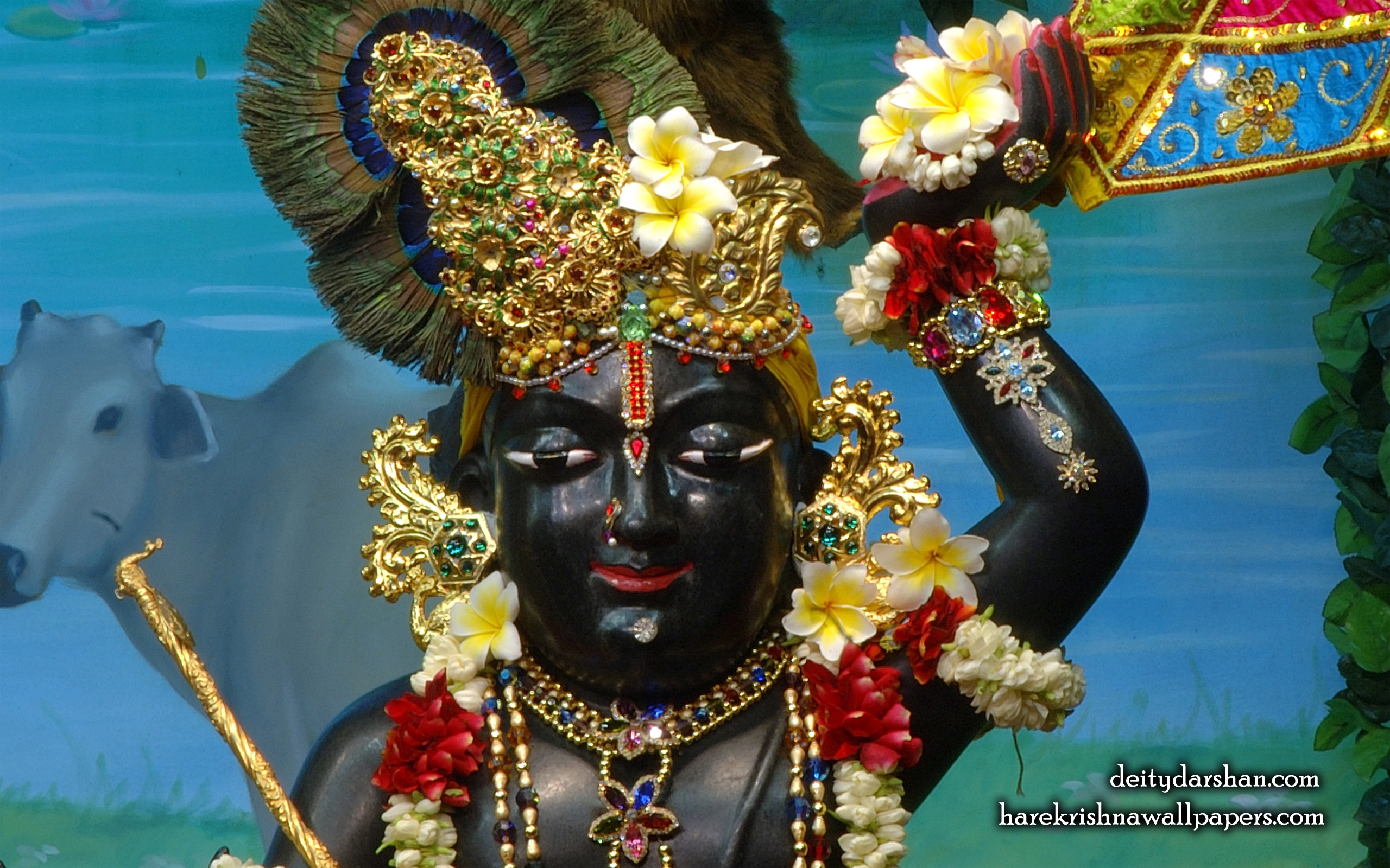 Sri Gopal Close up Wallpaper (056) Size 2560x1600 Download