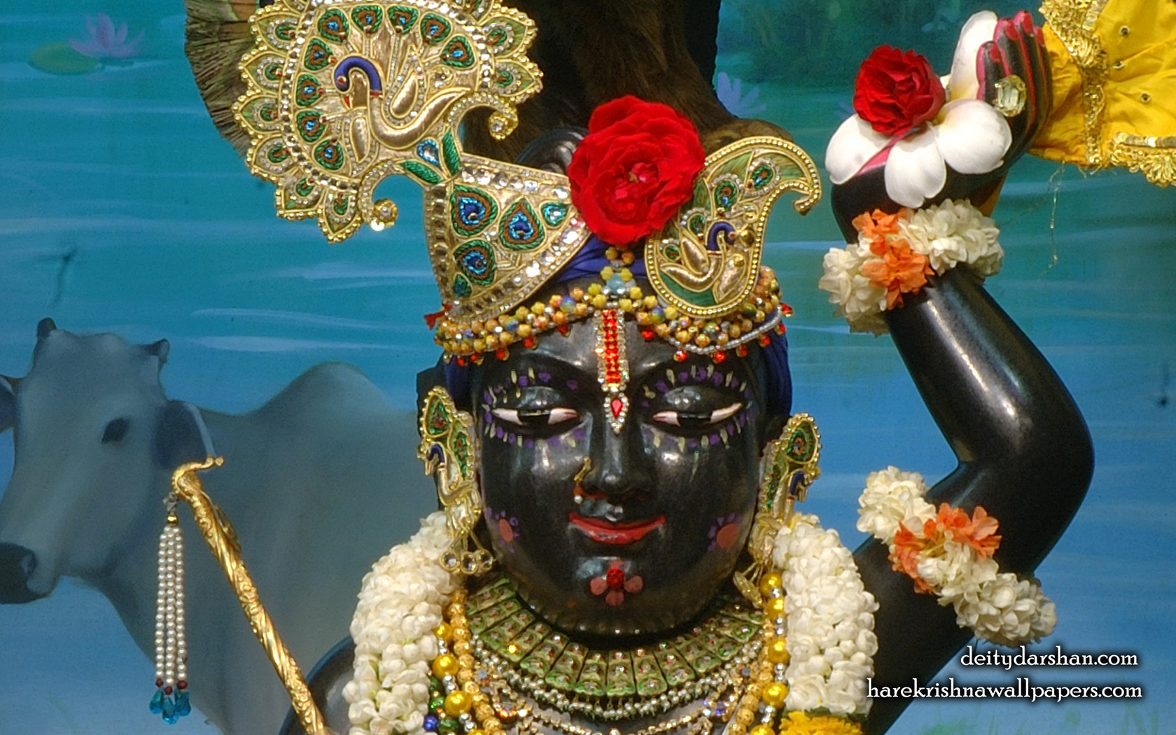 Sri Gopal Close up Wallpaper (060) Size 1680x1050 Download