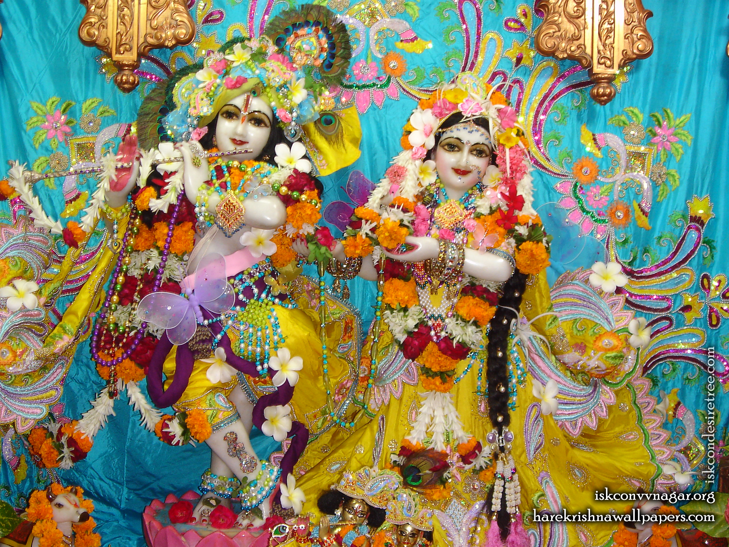 Sri Sri Radha Giridhari Wallpaper (008) Size 2400x1800 Download