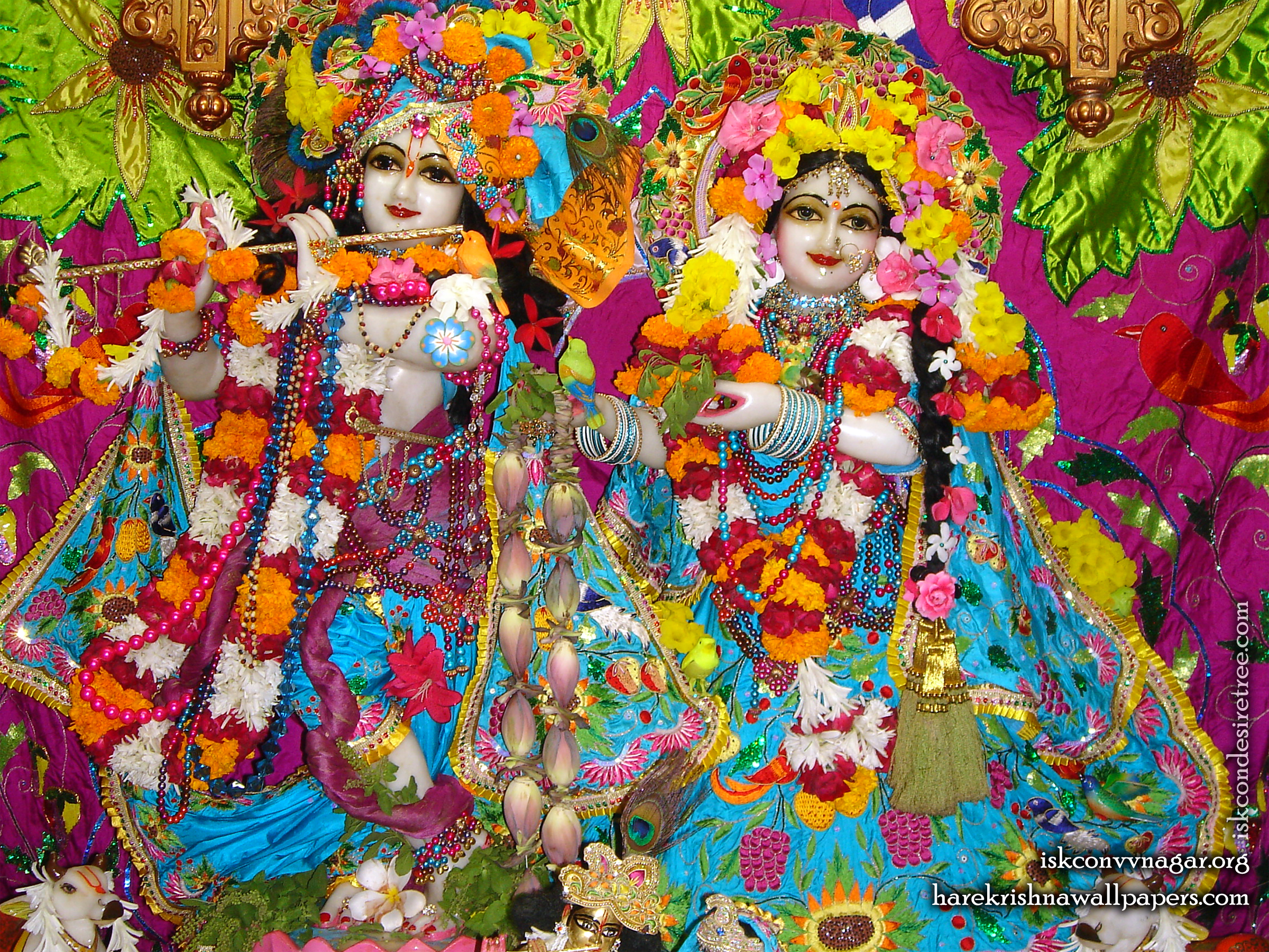 Sri Sri Radha Giridhari Wallpaper (015) Size 2400x1800 Download