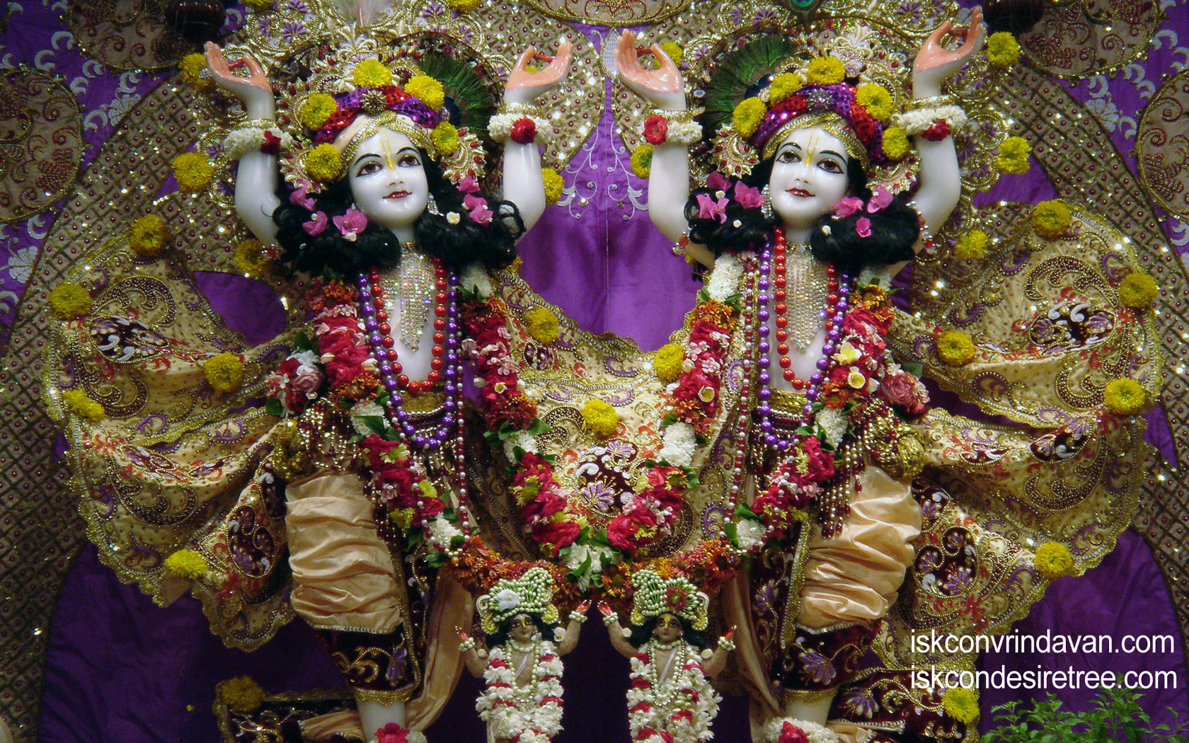 Sri Sri Gaura Nitai Wallpaper (013) Size 1680x1050 Download