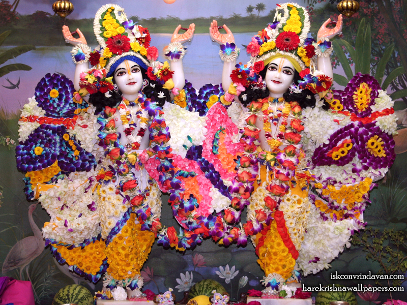 Sri Sri Gaura Nitai Wallpaper (088) Size 800x600 Download
